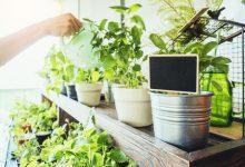 urban-home-gardening